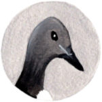 Guillemot Illustration